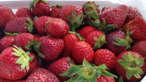 Strawberry season was in full swing at the North Carolina State Farmer's Market in late May